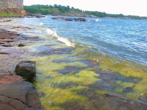 Eutrophication along the Finnish coast of the Gulf of Finland