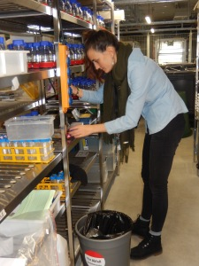 Fabienne Santschi taking some measurements. Picture © Altermatt lab.