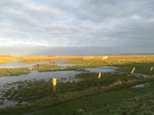 One of our field sites: a re-wetted coastal wetland at the Baltic sea.