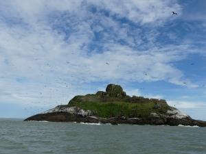 Frigatebirds soaring over Grand Connètable island in French Guiana. Picture taken by Manrico Sebastiano