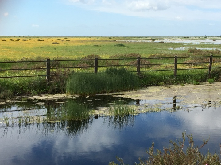 Annual grasslands in Doñana National Park (Spain). These ecosystems harbour an outstanding diversity of plants, insects (e.g. bees, beetles, ants, grasshoppers), and gastropods species with disparate trophic roles within communities.