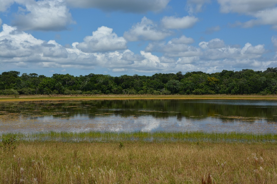 A pond within the Barranco Alto farm, located in the Nhecolândia region of Pantanal. Photo credit Larissa S.M. Sugai.