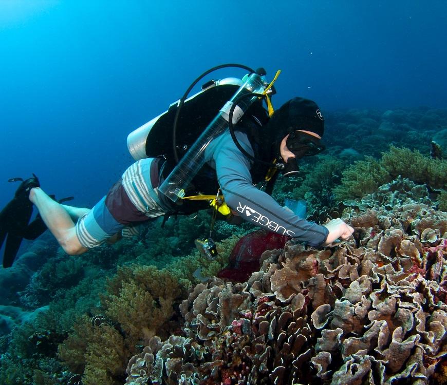 Dr. Fox sampling coral. Photo credit: Brian Zgliczynski