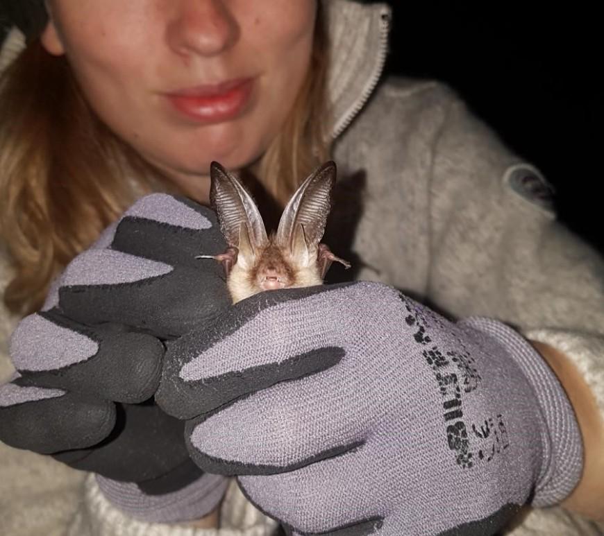 Mari with brown long-eared bat. Photo by Helene M. Hannestad
