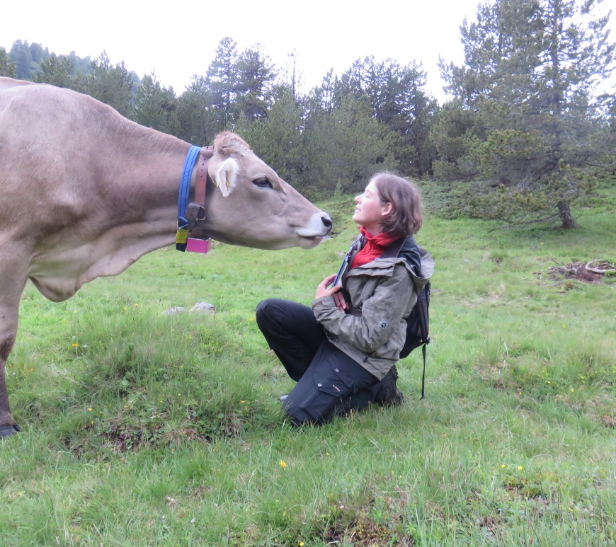 Caren Pauler enjoys working with cattle, especially in the harsh environmental conditions of her study area in the Swiss Alps (photo by Manuel Schneider).