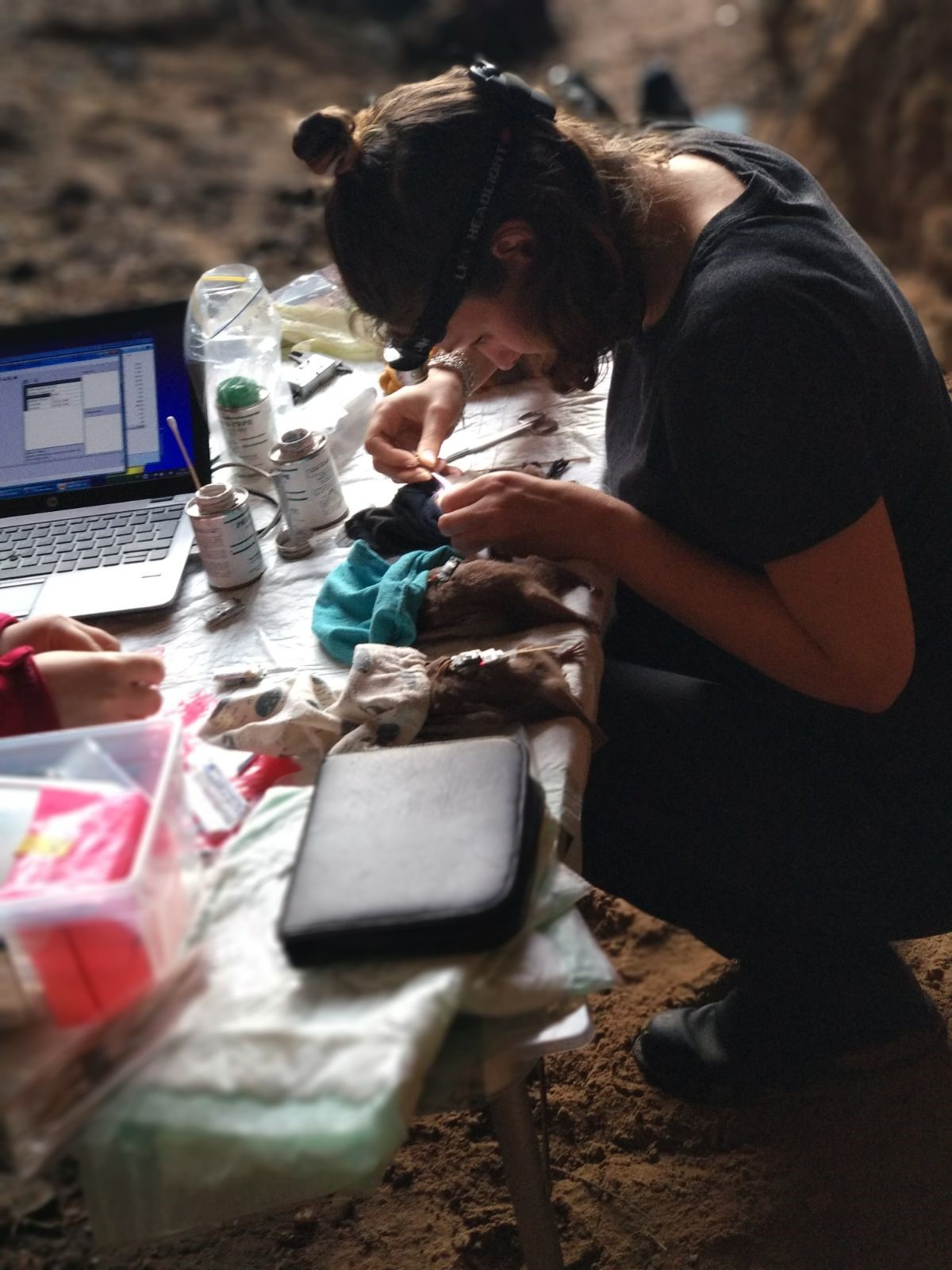Dr. Currie tagging Rousettus aegyptiacus with heart rate, accelerometry, and GPS loggers. Photo Credit: Lee Harten