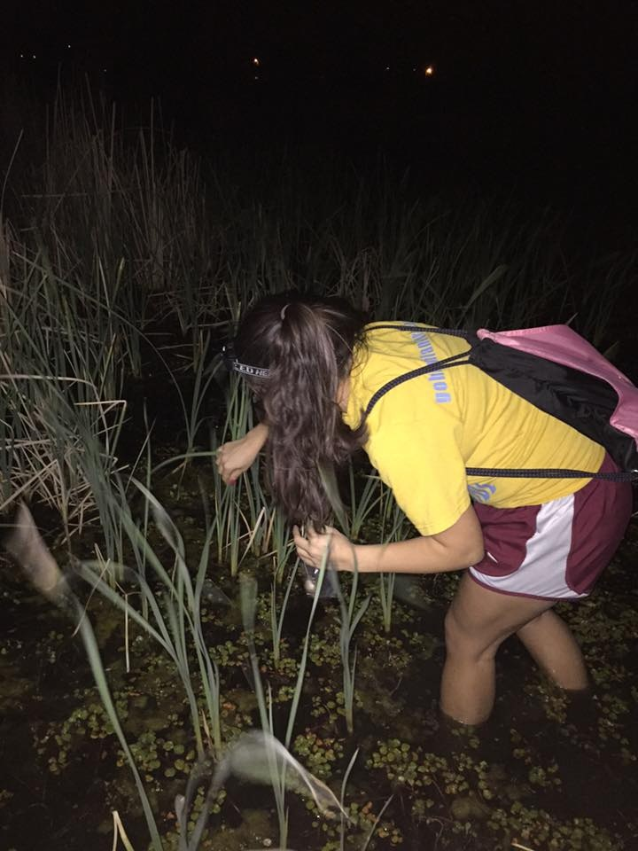 Searching for Cope's gray tree frogs (Hyla chrysoscelis) at Teal Ridge Wetland in Stillwater, OK. Photo credit: Dalton Hanson
