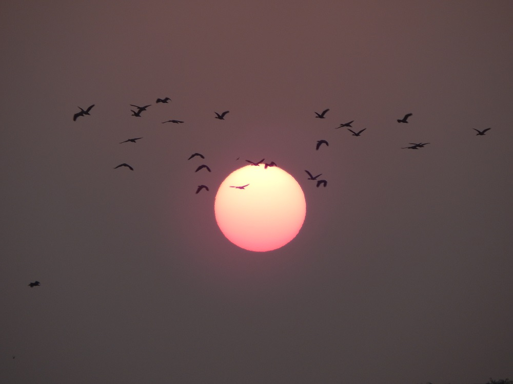 Daylight availability may play an important role in the evolution of avian migration. Photo by Chinmayee Mishra,  https://commons.wikimedia.org/wiki/File:A_clear_sunset_view.jpg#filelinks [commons.wikimedia.org]