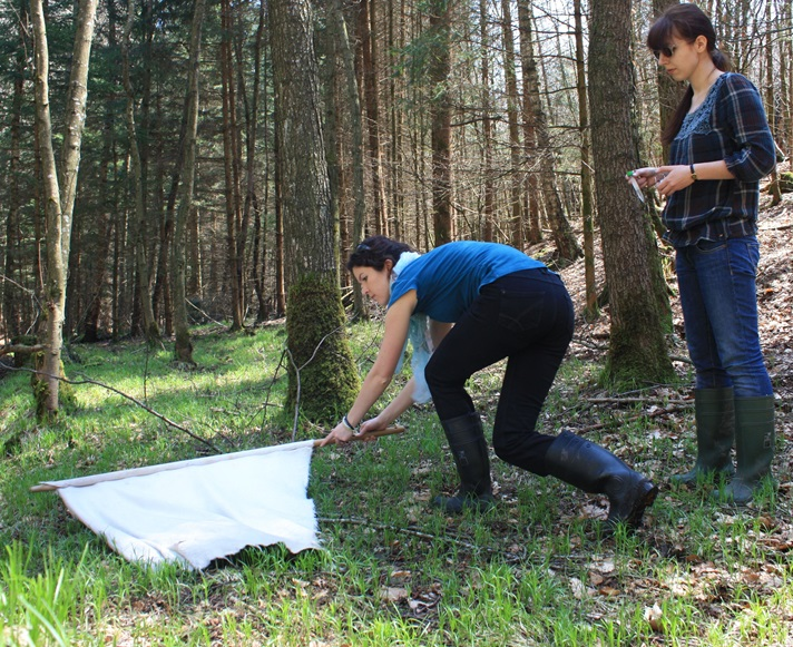 Collecting ticks from the vegetation using the flagging method (© University of Leipzig).