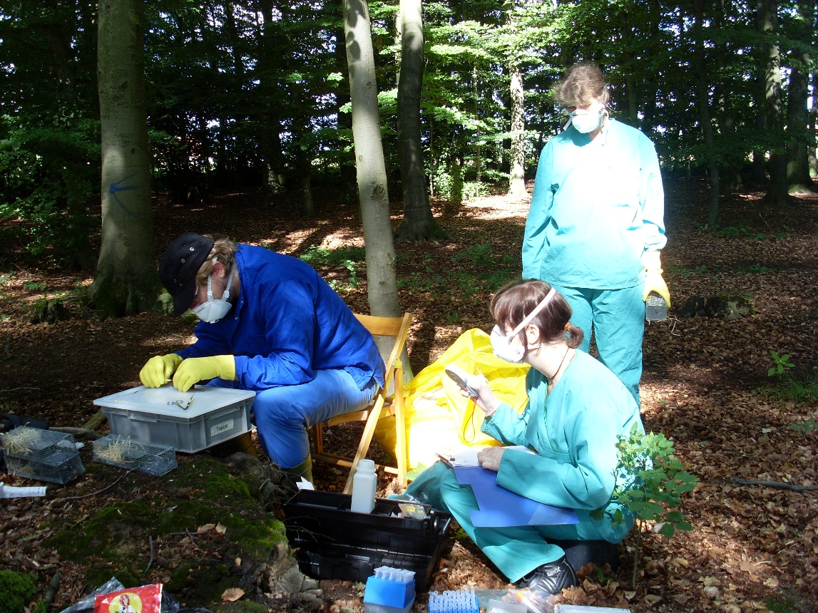 Capture-Mark-Recapture study in a German forest (© JKI).