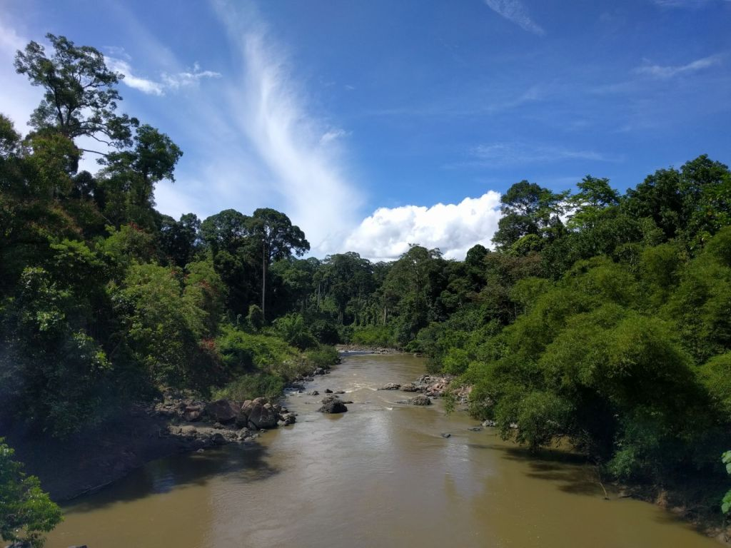 View of the Segama river and surrounding forest from the suspension bridge in the Danum Valley Field Center, Sabah, Malaysian Borneo. Photo credit Simone Messina