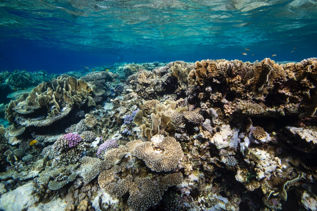 Highly diverse coral reef of the central Red Sea, Saudi Arabia. [Photo credit: Florian Roth]