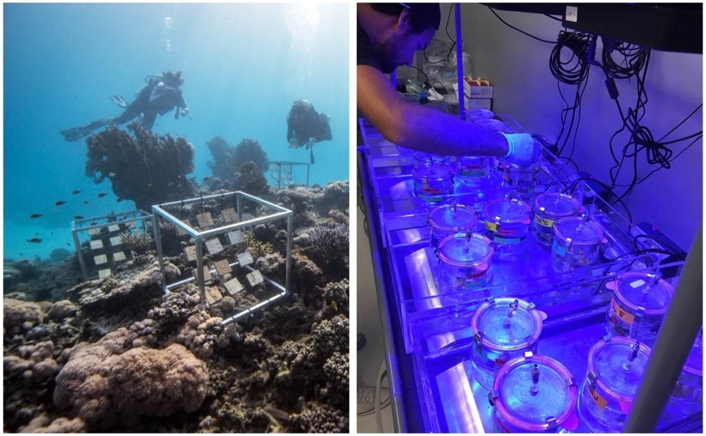 Most experiments were conducted directly in the reef (left), while dinitrogen fixation measurements were performed under controlled conditions in the laboratory (right). [Photo credit: Dr. Holger Anlauf (left), Florian Roth (right)]