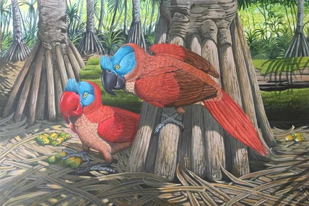 Painting showing the extinct broad-billed parrot, a seed predator from the Mascarenes. Credit: Julian Hume