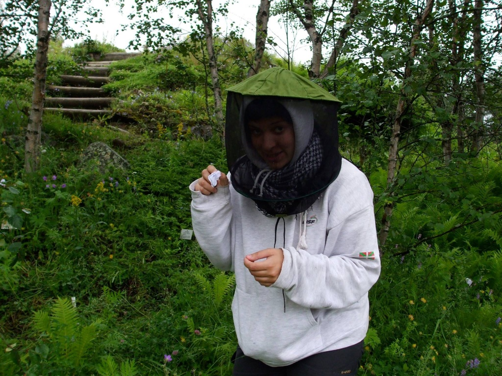 Classic field gear to protect myself from mosquitoes while bagging individual flowers in Finland.