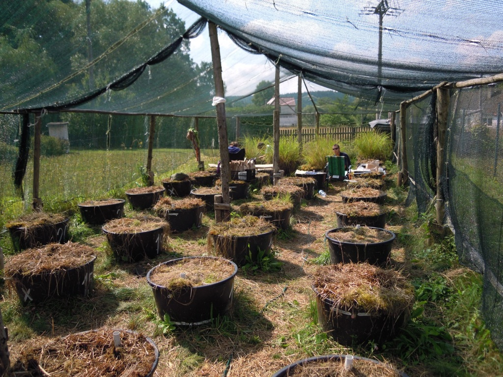 Garden experiment and biomass collecting, summer 2015