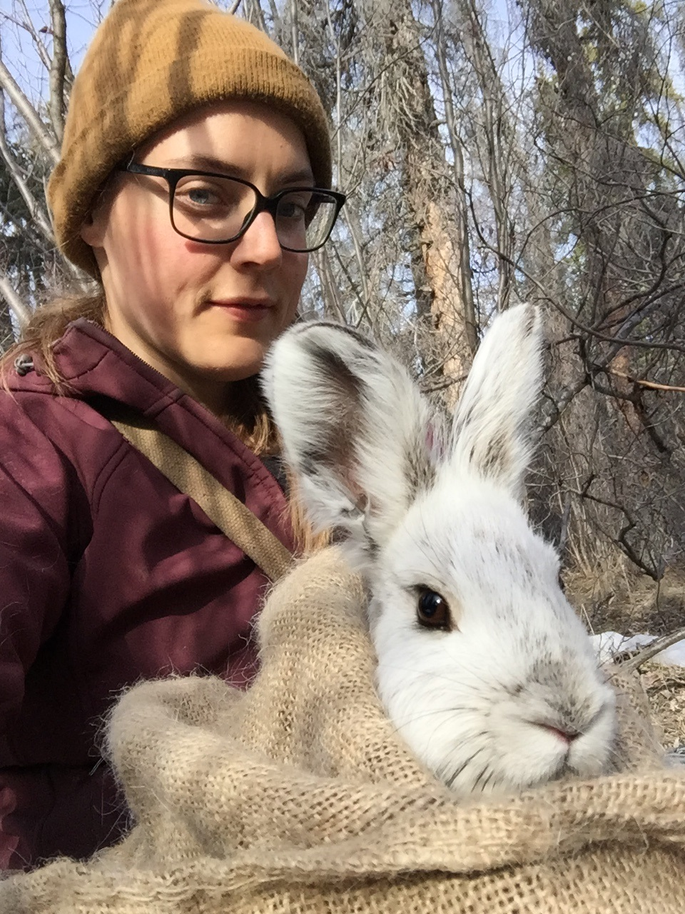 Ally releasing a snowshoe hare. Photo credit: Ally's iPhone.