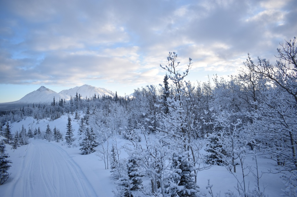 Winter scene in Kluane, Yukon. Photo credit: Allyson Menzies.