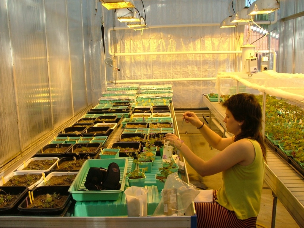 Working in the greenhouse in Oulu, Finland.