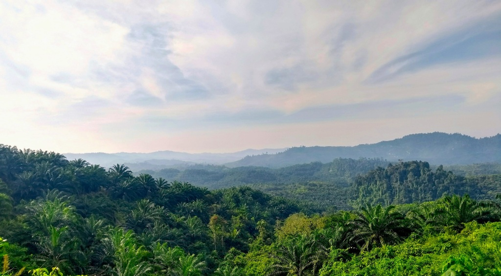 Oil palm-dominated landscape in the North of Sabah with small embedded rainforest remnants.