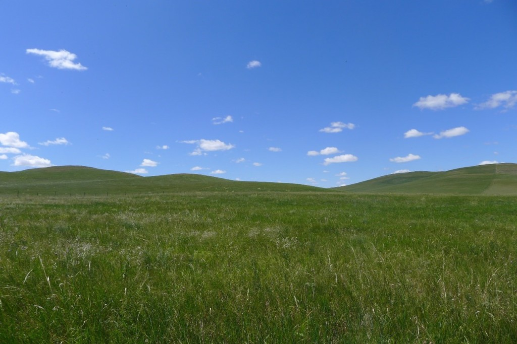 Overview of the studied grassland (photo by Bingwei Zhang)