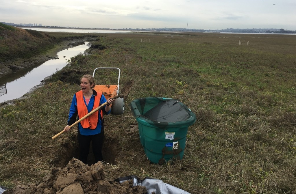 Dr. Lauren Nadler preparing field study mesocosms at the Kendall-Frost Mission Bay Marsh Reserve in San Diego, California, where the killifish used in this study were collected. (photo credit Stephen Brown).