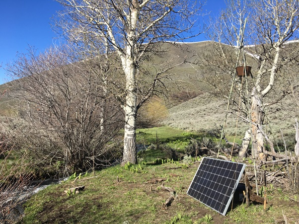 A suspended speaker broadcasts intense river noise near a small stream. The solar panel charges batteries that power the speaker throughout the day and night for months each year.