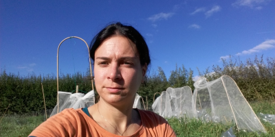 Sandra Varga setting up a field experiment to exclude pollinators in Lincoln, UK.