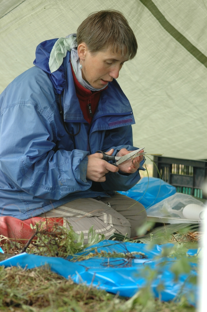 Jitka Klimesova sorting biomass in field