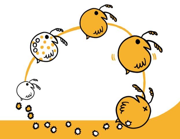 Daphnia life cycle by Savanna Ganucheau @Srganuch (https://srganuch.carbonmade.com/)