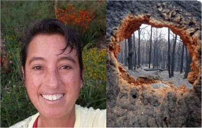 Bushfire grounds near Bermagui in south-eastern Australia, viewed through a destroyed termite mound. Photos: F. Scarff, J. Lewin.