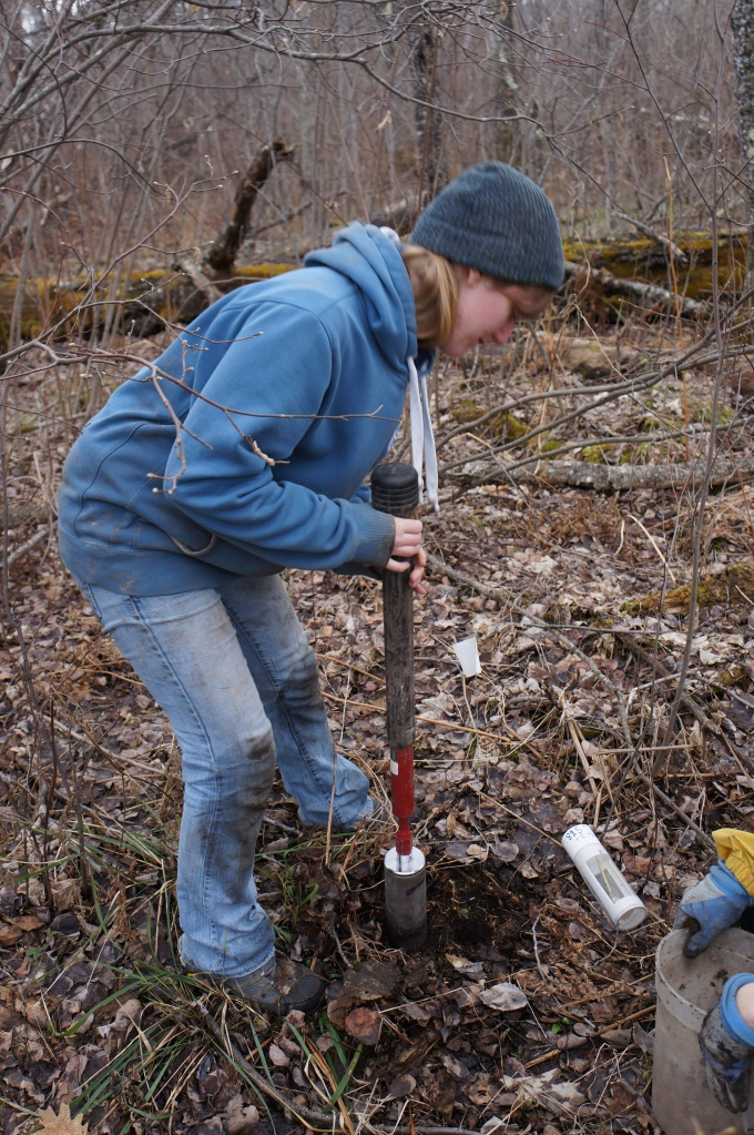 Jessica Moore uses a hammer corer to excavate soils. PVC mesocosms were filled with the soil and placed into the same hole the soil was collected from. A mesocosm laying on the ground here shows the windows lined with stainless steel mesh, which was large enough to allow roots, fungi, and most soil fauna to enter.