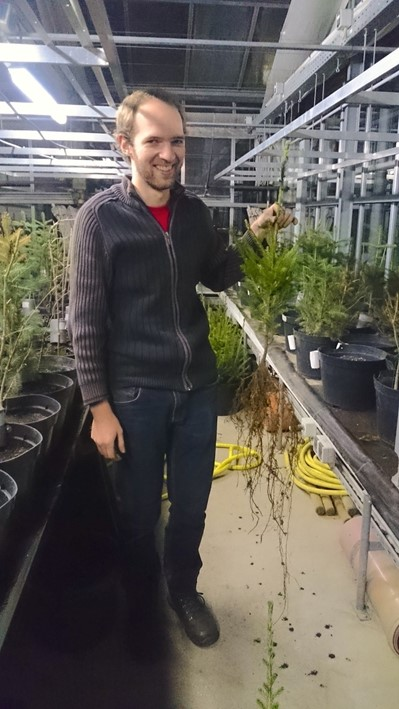 Setting trees into pots in the greenhouse was fun, especially when their root system was as long as the legs of the researcher.