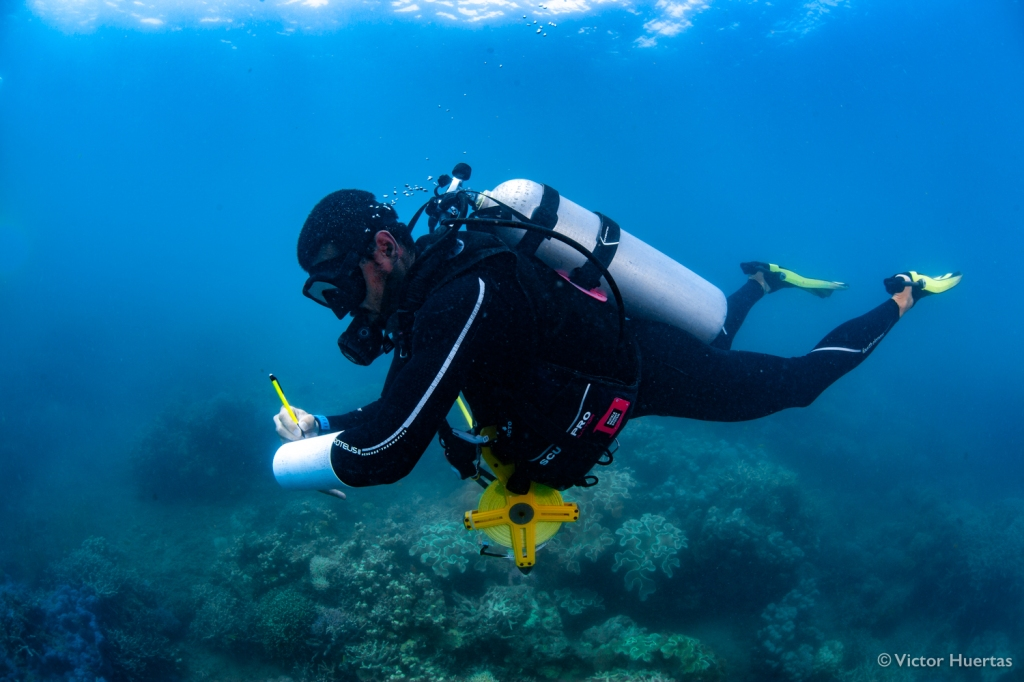 The lead author while counting fish underwater. 'High-tech' field gadgets used to collect data for this paper include toilet-grade PVC pipes, school pencils and fibreglass measuring tapes. Photo by Victor Huertas.