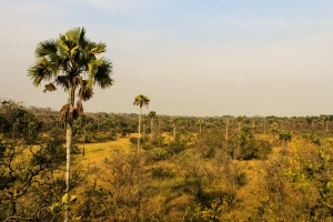 View of the Lamto savanna landscape. Photo: S. Barot
