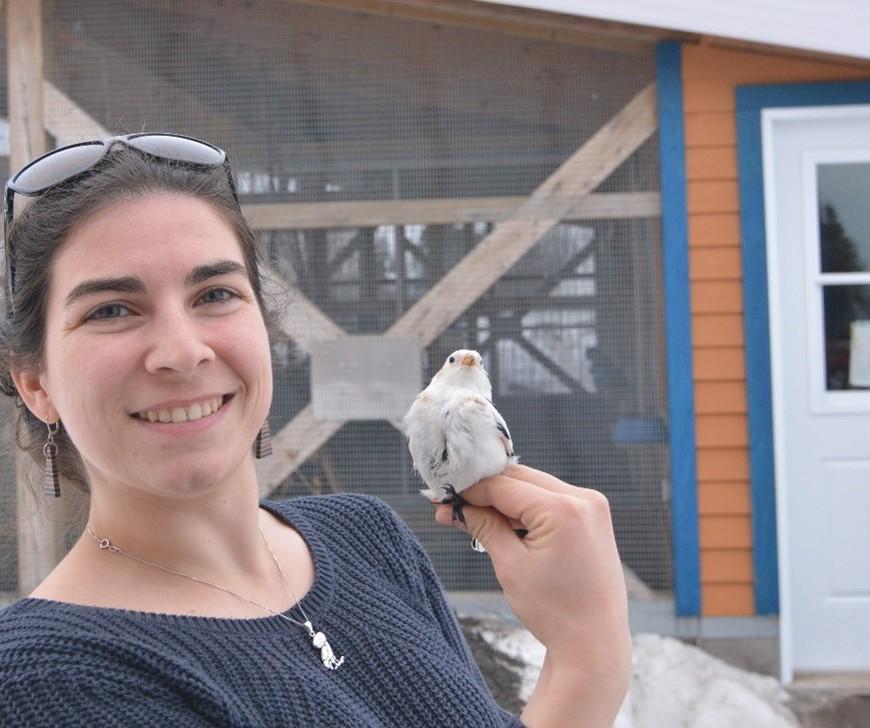 Audrey Le Pogam with a snow bunting in front of the aviary at the Université du Québec à Rimouski (Québec)