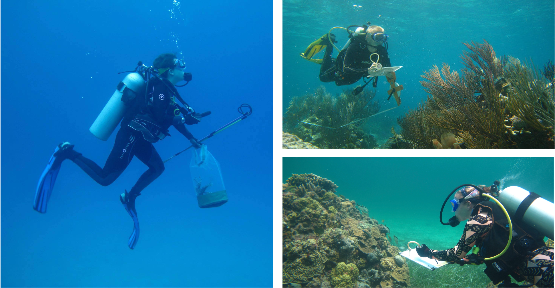 Study co-authors conducting fieldwork in The Bahamas. Counterclockwise from left is Allison Stringer with a live lionfish (Pterois volitans), Robert Lamb conducting a transect survey, and Lillian Tuttle observing cleaning stations at a coral patch reef. Photo credits: Lillian Tuttle, Tim Pusack, and Severin Vaillancourt, respectively.