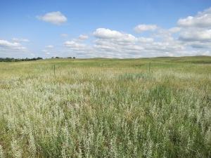 the plots at Niobrara Prairie Reserve