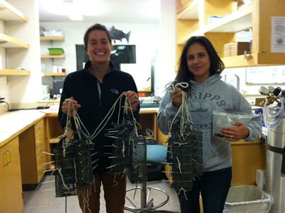 Katie Harrington and Michelle McCartha ready to deploy mesh enclosures and mussels. (photo credit Laura Newcomb)