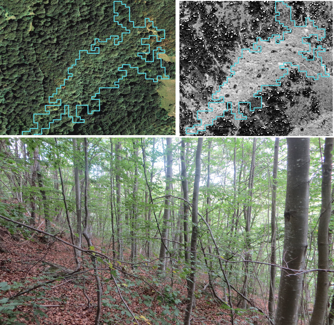 a photo of one of the recent forests included in the study, which also include (in the upper part) the historical orthophotos (pre and post-1950) where it is clear the forest regeneration