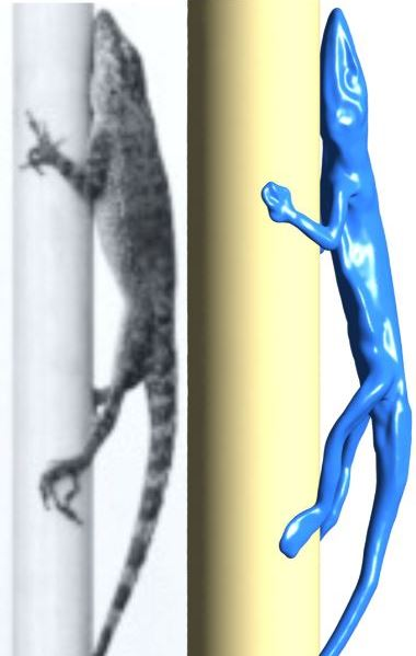 Video image of Anolis during a leafblower experiment by Donihue and co-workers (left) together with the 3D surface reconstruction by Shamil Debaere used in the study (right).