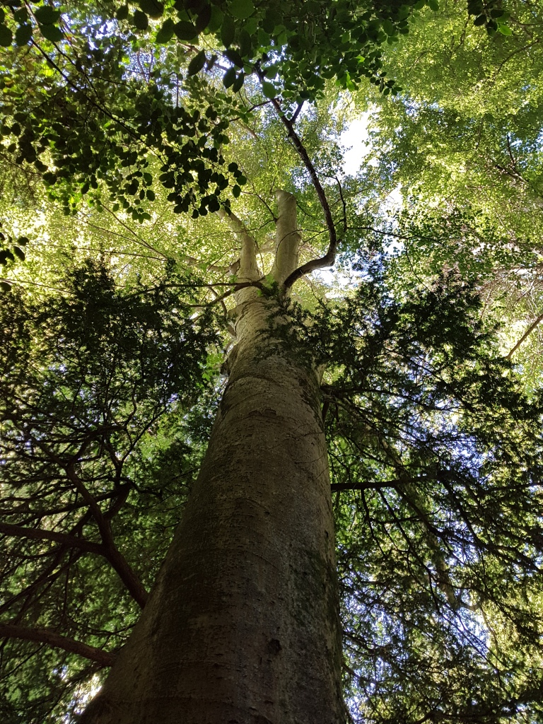 Sainte Baume forest (South-Eastern France)