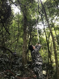 Hao collecting green leaves in a subtropical forest. Photo by Zhenchuan Wang.