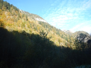 Combe d'Ire forest (Northern French Alps)
