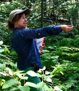 Audrey Barker Plotkin selecting study oaks in forests defoliated by Lymantria dispar. Photo credit: Valerie Pasquarella