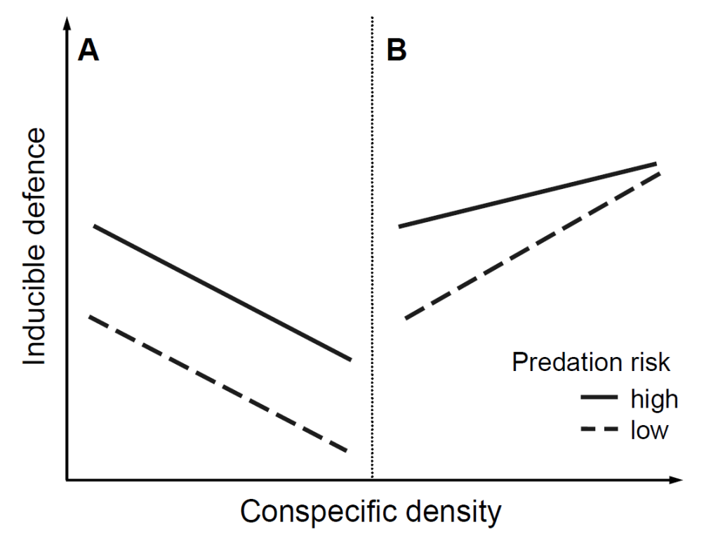 Both defensive traits (A, B) provide anti-predatory protection, and their expression level increases with increasing predation risk. However, 'A' represents an anti-predatory defence that is disadvantageous in competition whereas 'B' is effective against both predators and conspecifics (B).