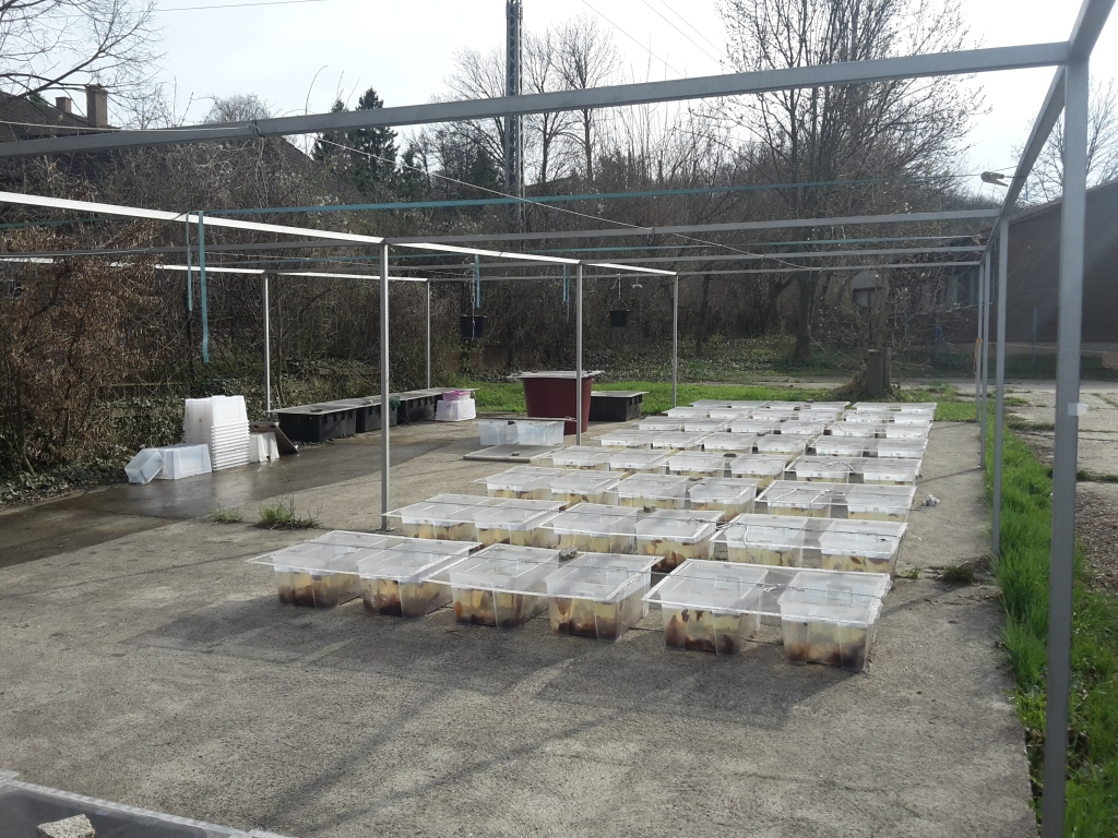 Mesocosms in the experiment.