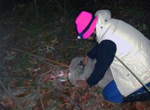 Anushika releasing a possum after conducting behavioural tests at 2.30 am in Ku-ring-gai Chase National Park.